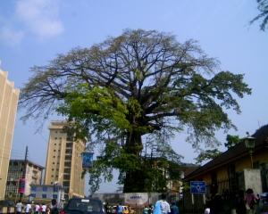 Cotton Tree in Freetown, Sierra Leone